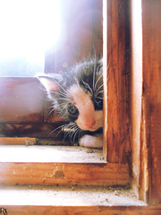 Cats Edition 7 - (27) (Robert Krstevski) Tags: pet cats pets animal animals fauna cat photography kitten kitty kittens macedonia kitties popular photooftheday petlovers animallovers catsphotography robertkrstevski robertkrstevskiblogspotcom catsedition7
