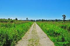 Surrey Bend Regional Park 16-0626-0498 (digitalmarbles) Tags: landscape scenic summer smallaperture serene tranquil road trail trees nature grass marsh surreybendregionalpark surreybc lowermainland bc britishcolumbia canada nikond300 nikon