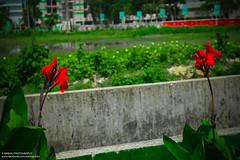 IMG_9485 (IamMinhaj) Tags: street red flower nature outdoor coxsbazar kolatoli