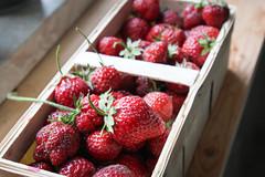 Erste Gartenerdbeeren (blumenbiene) Tags: fruits garden strawberry strawberries jelly jam garten erdbeere erdbeeren frchte gelee marmelade fragaria erdbeermarmelade