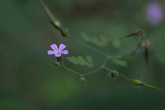 Every inch counts (shokisan) Tags: spring colors flower forest green branch dof shallowdof bokeh