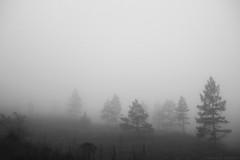 Nevoeiro (fabsciack) Tags: trees blackandwhite bw mist tree branco fog dark darkness gray foggy pb preto e arvore arvores neblina árvore cinza pretoebranco escuro árvores nevoeiro escuridão