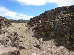 Yutah (YutahtheWolamute) Tags: desert wolfdog wolamute yutahw yutahthewolfdog dog malamute adventure trail hiking eastern washington summer fun