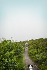 Frolicking (grilljam) Tags: summer hiking seamus ewan baileyisland 4yrs overcastday giantsstairs 65yrs june2016 stillagreatone
