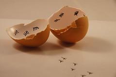 Out of the Egg (tim ellis) Tags: escape egg homage tally count hatched mshbest msh0513 msh05139 mshbest4