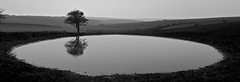 Dew Pond - South Downs (Peter J Dean) Tags: blackandwhite holiday tree water monochrome landscape sussex break southdowns dewpond canonef1635mmf28liiusm canonef1635mmf28lii canon7d