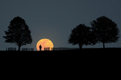 Perigee Full Moon (Carlos Gotay Martnez) Tags: trees sky moon man field silhouette fence horizon moonrise perigee myfriendrobert supermoon perigeefullmoon