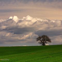 (tozofoto) Tags: light tree nature field clouds canon landscape hungary zala supershot flickrdiamond tozofoto