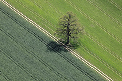 Oak Between Fields (Aerial Photography) Tags: tree verde green by ed spring oak aerial diagonal grn baum frhling luftbild diagonale leaftree eiche luftaufnahme obb laubbaum deciduoustree foliagetree hammersdorf fotoklausleidorfwwwleidorfde vgpastetten 27042012 1ds76942 buchabuchrain