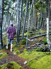 Walk on Turtle Head, Islesboro (MaineIslandGirl) Tags: ocean trees sunset summer beach colors moss woods maine atlantic birch ferns lincolnville islesboro