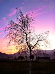 the birch (SS) Tags: above city pink november blue light sunset red sky italy orange white mountain black tree verde green nature colors weather silhouette yellow vertical clouds composition contrast landscape photography evening countryside colorful soft mood glow peace view purple angle pov walk branches liguria perspective scenic gimp burning spicy framing bianco nero depth tone vastness celeste iphone atmophere natureselegantshots
