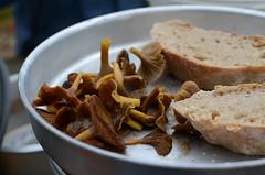 Gribskov, Denmark (Jacob Damgaard) Tags: mushroom bread denmark autum hunting danish nordic scandinavia svamp funnel collecting hunt chanterelles trangia skov kantareller brød svampe efterår gribskov svampetur tragt tragtkantareller stormkøkken