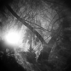 Morning impressions in a suburban backyard (kevin dooley) Tags: morning light bw white house black tree 120 6x6 tlr film home analog yard dark square holga lomo lomography backyard branch suburban medium format impressions vignette tempecamera