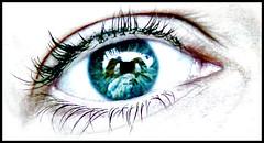 The world through my eye (~Bella189) Tags: macro eye gamewinner fotocompetition fotocompetitionbronze yourockwinner herowinner pregamesweepwinner