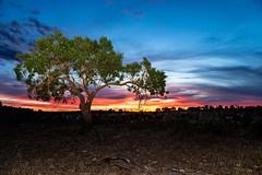 Arbol con puesta de sol (Jose Casielles) Tags: noche casa arboles colores luna nubes puestadesol puesta nocturnas tierra yecla casadecampo vias fotosnocturnas casaabandonada cepas fotografasjosecasielles