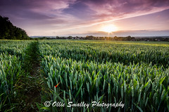 Sunset Field. (Ollie Smalley Photography  Travelling) Tags: uk pink houses light sunset england sun yellow canon photography golden kent soft village purple wheat south horizon hard sigma east ollie filter 09 vista crops 1020mm 06 11mm hitech starburst graduated density neutral smalley 550d chelsfield t2i