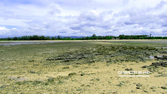 Seabed dried up during low-tide in Cagbalete Island (Merwin's Travelogue) Tags: travel beach nature lowtide philipines mauban cagbalete quezonprovince villacleofas merwinbustarde