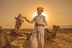 MIA_3979a (yaman ibrahim) Tags: sunset woman sun india man birds festival sunrise colours indian pot camel pottery pushkar camels jaipur barsana sunnyday sunsetpoint rajashtan festivalofcolours sunsetindia holifest holitime rawanhathha rajastandesert
