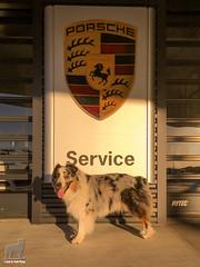 The Service Dog (Jasper's Human) Tags: arizona us unitedstates chandler