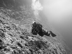 2016 05 27_G1X_Studentresa_0021_edited-1 (Thomas_SJ) Tags: life white fish black swim marine underwater picture scuba diving scubadiving diver mallorca underwaterphotography