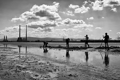 Looking for bait, Dublin (Peter O'Doherty (Dublin)) Tags: sea dublin beach photography digging documentary photograph chimneys bait poolbeg dotsy peterodoherty