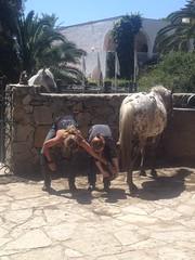 Jessica_Emmerich_Horsemanship_Andalusien_07 (jessica_emmerich) Tags: hotel natural jessica hurricane second andalusien spanien tarifa kurs horsemanship emmerich hippica