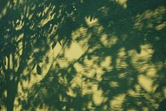 Shadows (Sareni) Tags: trees light shadow tree texture wall evening spring shadows branches serbia may vojvodina twop srbija banat 2016 prolece senka zid vece senke alibunar juznibanat sareni