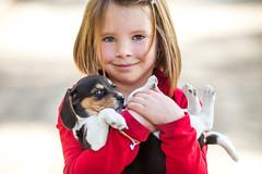 Katie Belle (Thomas Hawk) Tags: california usa dog beagle america puppy unitedstates kate unitedstatesofamerica byron fav10 byronhotsprings fav25