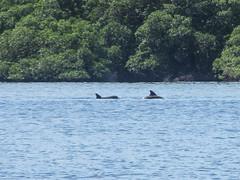 "Bahia de los Dolfines <a style=""margin-left:10px; font-size:0.8em;"" href=""http://www.flickr.com/photos/127723101@N04/27263086321/"" target=""_blank"">@flickr</a>"