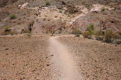 5R6K2970 (ATeshima) Tags: arizona nature havasu