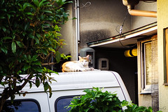 Today's Cat@2016-06-18 (masatsu) Tags: cat pentax catspotting mx1 thebiggestgroupwithonlycats