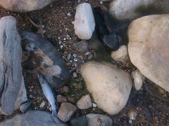 Dead Fish & Dead shoe (Babak Habibi) Tags: sea fish beach dead shoe      mahmoodabad