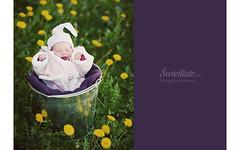 Swietliste-fotografia-dziecieca-noworodkowa-9-dzien-zycia