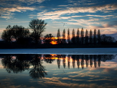 Nature clones... (Pixeled79) Tags: blue winter sunset cloud sun lake cold reflection tree ice nature water silhouette germany landscape deutschland mirror nikon wasser ray glow earth spiegel planet bodensee landschaft konstanz constance d300 reichenau