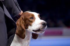 happy dog (beaglou prod) Tags: show dog france smile animal canon word exposition sourire 2011 beaglouprod worddogshow