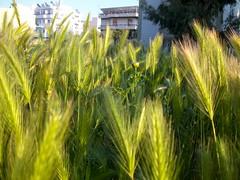 Greek nature