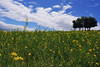 Typical spring spectacle (y2-hiro) Tags: flowers blue trees sky green yellow landscape spring nikon d3s