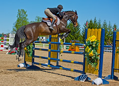 Equestrian Jump 1