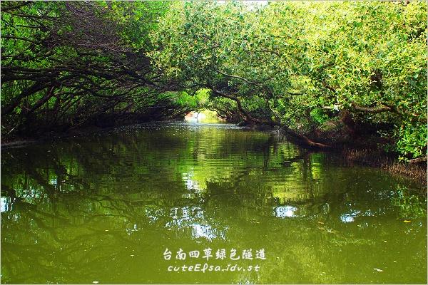 【台南安南區】四草遊綠色隧道參觀紅樹林生態!