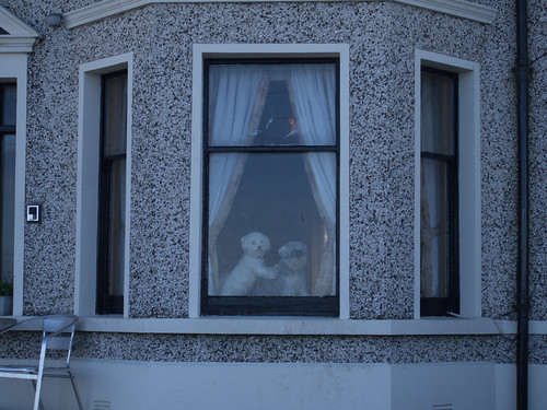 Dogs in window