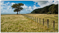 Clifton (thelostbeegee) Tags: flowers sea newzealand sky tree beach water grass clouds bay waves bluesky hills hawkesbay sonya350 sony16105mm