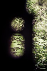 Sarrailatik Haragoko Argira. Urberuaga (Igorza76) Tags: door abandoned puerta lock keyhole spa cerradura balneario abandonado atea markina sarraila zerraila urberuaga abandonatua bainuetxe