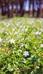 (Mr.Groka (Gorka Valencia)) Tags: flores flower verde film vertical analog flor negative lubitel lubitel166 bizkaia negativo vizcaya analgico pasvasco getxo pelcula aixerrota lomographycn100
