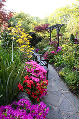 Pergola view to show the azaleas in spring (May 22) (Four Seasons Garden) Tags: fourseasonsgarden