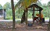 Another day (thilakj) Tags: beach rural coast coconut young srilanka sell tender