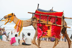 Puri Candid ! (Monsoon Lover) Tags: india beach fun funny flickr camel orissa puri jagannath bengali bangali lordjagannath sudipguharay stayatsterlingresort dineathanscocopalm aakebarejolerdoreymeansverycheap