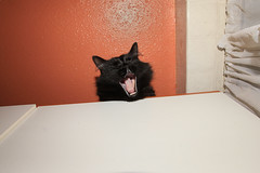 untitled by E.Yelsel - This one laughs at his own jokes...