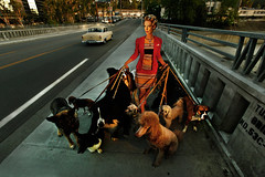 The Dogwalker (rachelbujalski) Tags: morning bridge sunset dogs sunrise losangeles walk hollywood 1950s oldcar studiocity tujunga leashes dogwalker curlers