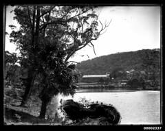 Riverscape scene, possibly the Hawkesbury River near Singleton's Mill, 1880-1909 (Australian National Maritime Museum on The Commons) Tags: australia outback hawkesburyriver australianscenery landscapephotography australianbush gunderman singletonsmill layburyscreek williamfhallcollection