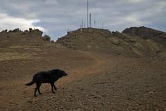 4mai_Thorbjorn_027 (Stefn H. Kristinsson) Tags: dog mountain dogs iceland spring hiking may ma vor hundur sland ganga fjallganga tamron2875mm grindavk hundar grindavik orbjrn nikond800 thornbjorn orbjarnarfell